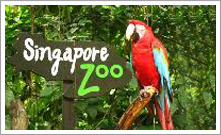 Limousine to Singapore Zoo